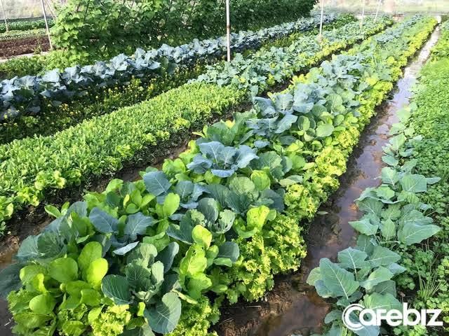 Giáo sư Việt tại Nhật lý giải vì đâu mỗi nông dân Việt xuất khẩu chỉ bằng 1/40 nông dân Nhật: 'Hầu hết dùng smartphone để liên lạc, giải trí hơn là phục vụ nông nghiệp' - Ảnh 2.