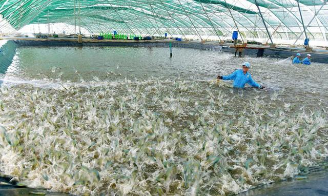 Mất 2 năm doanh nghiệp thủy sản mới có thể phục hồi sản xuất? - Ảnh 1.