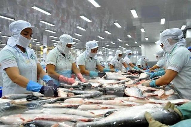 Mất 2 năm doanh nghiệp thủy sản mới có thể phục hồi sản xuất? - Ảnh 2.