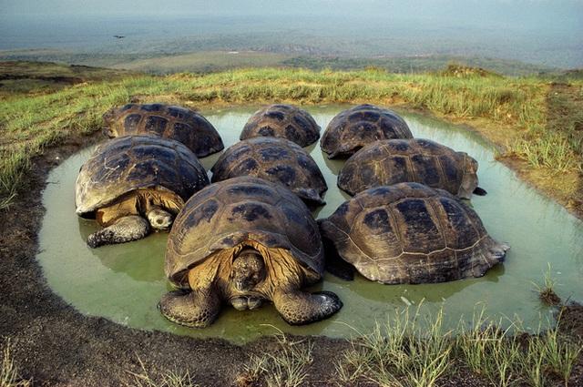Quần đảo Galapagos: Thế giới thời tiền sử ở Thái Bình Dương! - Ảnh 2.