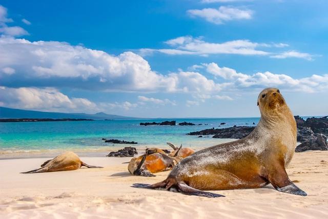 Quần đảo Galapagos: Thế giới thời tiền sử ở Thái Bình Dương! - Ảnh 3.