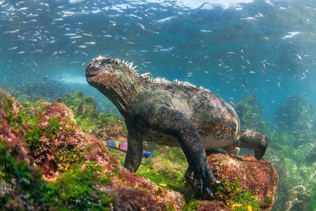Quần đảo Galapagos: Thế giới thời tiền sử ở Thái Bình Dương! - Ảnh 4.