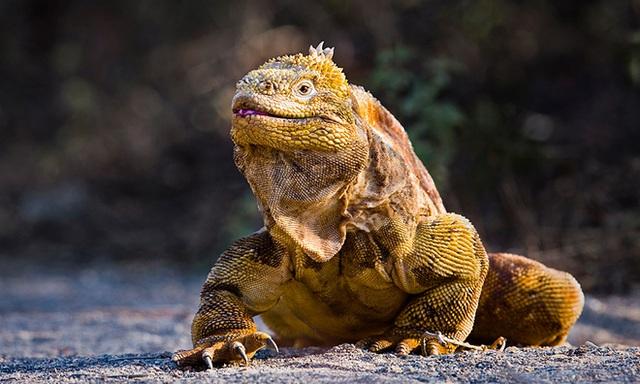 Quần đảo Galapagos: Thế giới thời tiền sử ở Thái Bình Dương! - Ảnh 5.