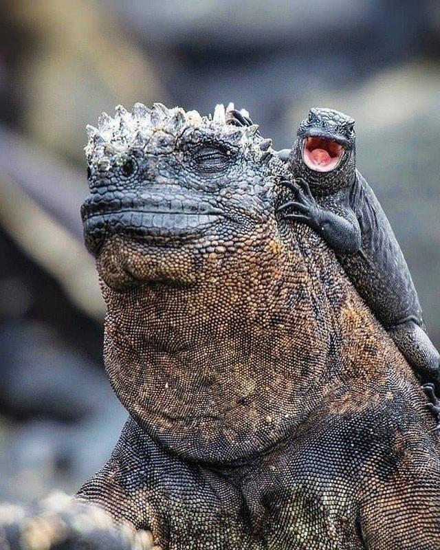 Quần đảo Galapagos: Thế giới thời tiền sử ở Thái Bình Dương! - Ảnh 6.