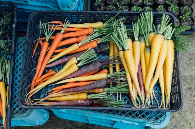Bỏ việc về quê, nuôi cá và trồng thêm rau: Cuộc sống thảnh thơi, như mơ của đôi vợ chồng khiến nhiều người phát cuồng - Ảnh 22.