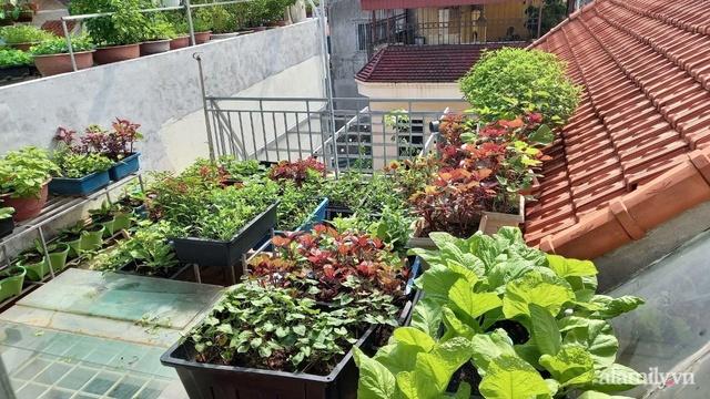 Khoảng sân thượng chỉ 15m² nhưng đủ các loại rau xanh tốt tươi không lo thiếu thực phẩm mùa dịch ở Hà Nội - Ảnh 1.