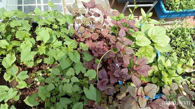 Khoảng sân thượng chỉ 15m² nhưng đủ các loại rau xanh tốt tươi không lo thiếu thực phẩm mùa dịch ở Hà Nội - Ảnh 2.