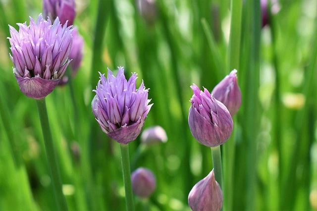 Để giảm stress và thêm yêu đời thì đừng bỏ qua việc trồng 4 loài hoa này trong nhà - Ảnh 3.