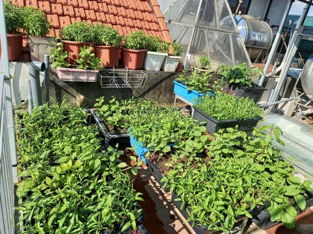 Khoảng sân thượng chỉ 15m² nhưng đủ các loại rau xanh tốt tươi không lo thiếu thực phẩm mùa dịch ở Hà Nội - Ảnh 23.