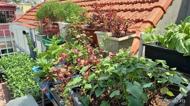 Khoảng sân thượng chỉ 15m² nhưng đủ các loại rau xanh tốt tươi không lo thiếu thực phẩm mùa dịch ở Hà Nội - Ảnh 6.
