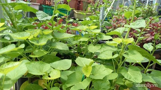 Khoảng sân thượng chỉ 15m² nhưng đủ các loại rau xanh tốt tươi không lo thiếu thực phẩm mùa dịch ở Hà Nội - Ảnh 7.