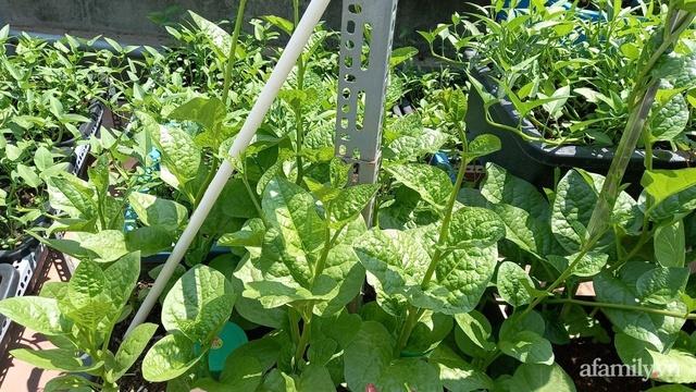Khoảng sân thượng chỉ 15m² nhưng đủ các loại rau xanh tốt tươi không lo thiếu thực phẩm mùa dịch ở Hà Nội - Ảnh 8.