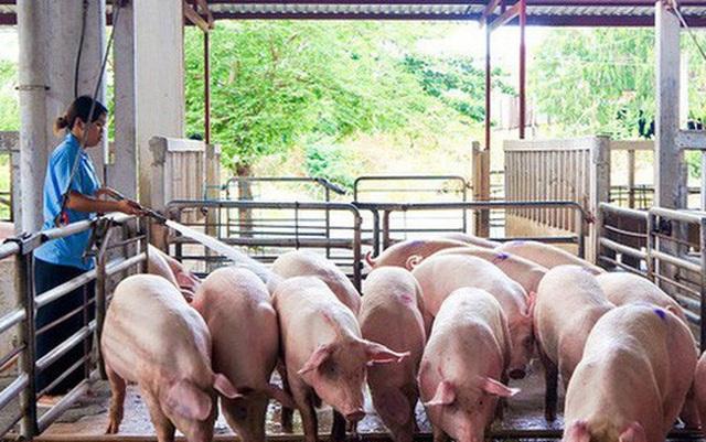 Giá lợn hơi chạm đáy, thấp nhất 2 năm - Ảnh 1.