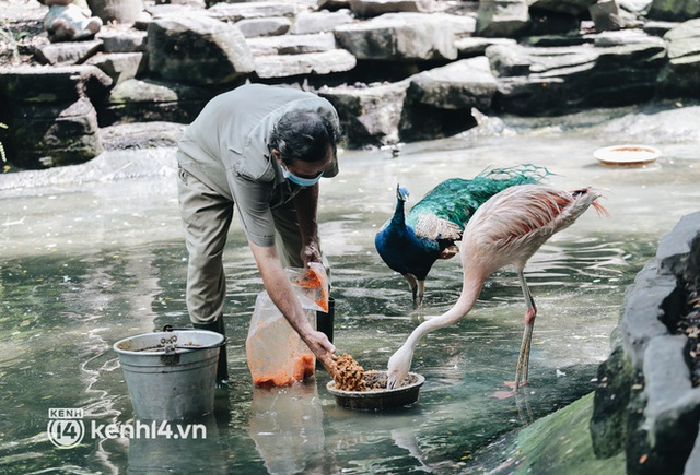 Chuyện 34 nhân viên ở lại Thảo Cầm Viên chăm sóc bầy thú giữa dịch Covid-19: Phải cố gắng không để thú nuôi bị đói - Ảnh 12.