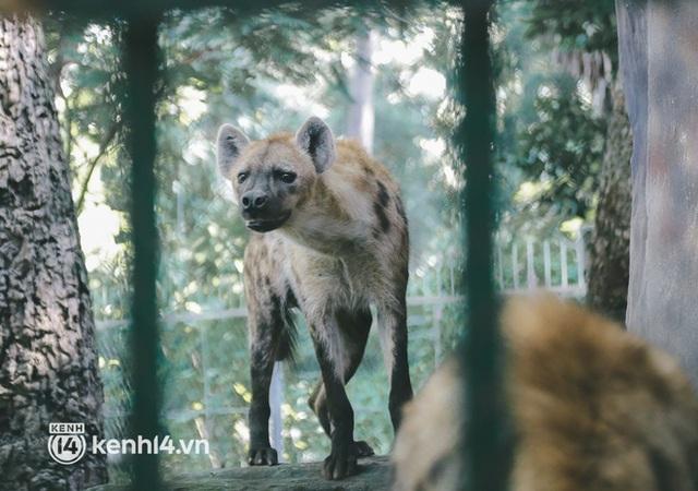 Chuyện 34 nhân viên ở lại Thảo Cầm Viên chăm sóc bầy thú giữa dịch Covid-19: Phải cố gắng không để thú nuôi bị đói - Ảnh 13.