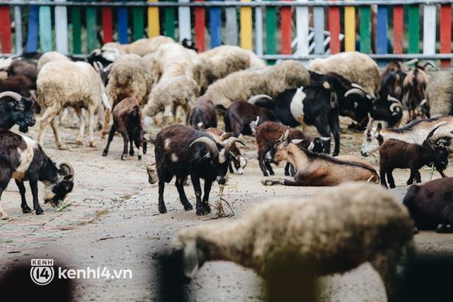 Chuyện 34 nhân viên ở lại Thảo Cầm Viên chăm sóc bầy thú giữa dịch Covid-19: Phải cố gắng không để thú nuôi bị đói - Ảnh 17.