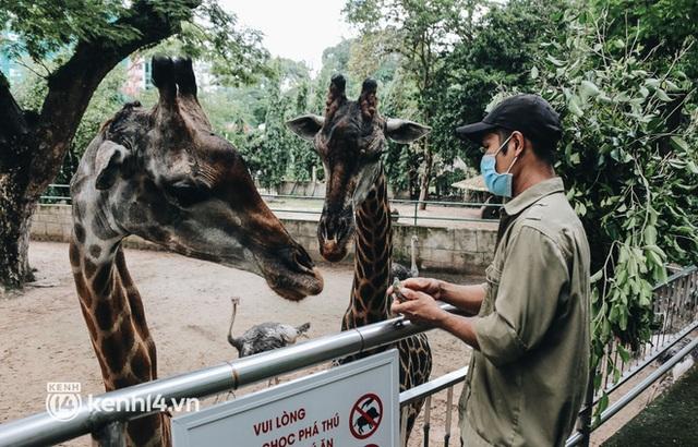 Chuyện 34 nhân viên ở lại Thảo Cầm Viên chăm sóc bầy thú giữa dịch Covid-19: Phải cố gắng không để thú nuôi bị đói - Ảnh 24.