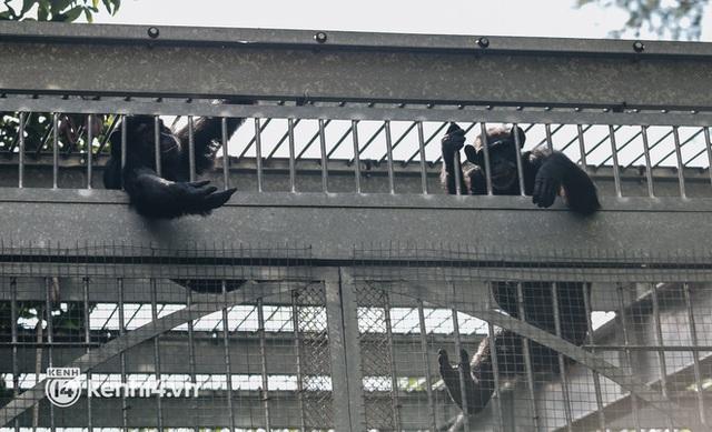Chuyện 34 nhân viên ở lại Thảo Cầm Viên chăm sóc bầy thú giữa dịch Covid-19: Phải cố gắng không để thú nuôi bị đói - Ảnh 7.