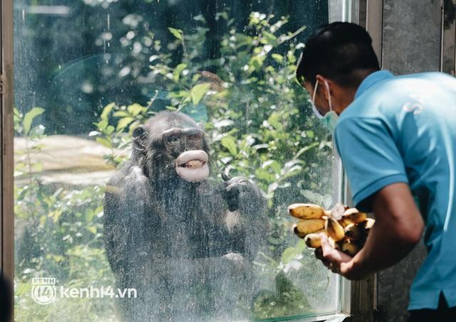 Chuyện 34 nhân viên ở lại Thảo Cầm Viên chăm sóc bầy thú giữa dịch Covid-19: Phải cố gắng không để thú nuôi bị đói - Ảnh 9.