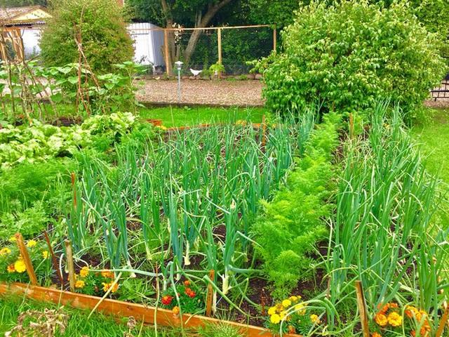 Khu vườn cổ tích của hai chàng trai có cùng sở thích trồng rau, nuôi gà  - Ảnh 11.