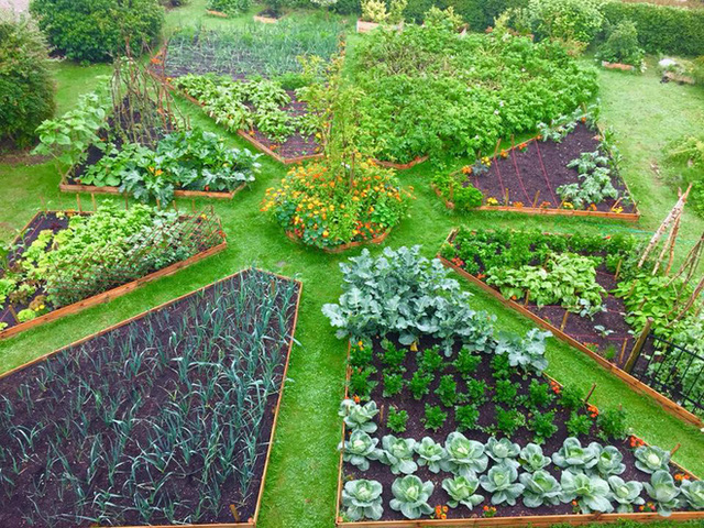 Khu vườn cổ tích của hai chàng trai có cùng sở thích trồng rau, nuôi gà  - Ảnh 12.