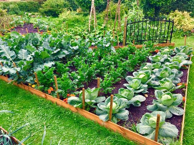 Khu vườn cổ tích của hai chàng trai có cùng sở thích trồng rau, nuôi gà  - Ảnh 13.
