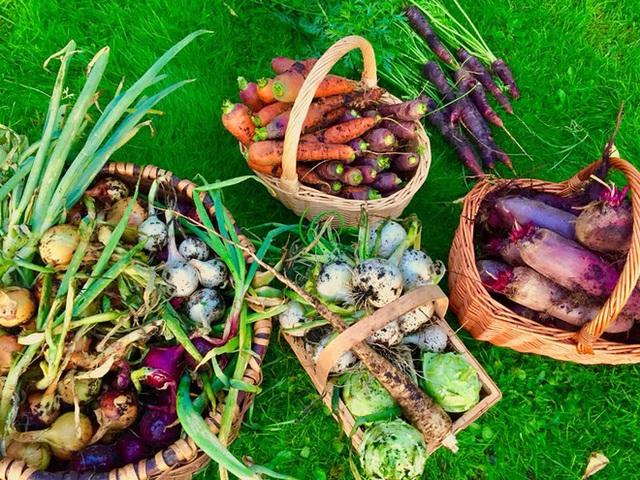 Khu vườn cổ tích của hai chàng trai có cùng sở thích trồng rau, nuôi gà  - Ảnh 20.
