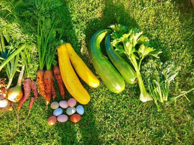 Khu vườn cổ tích của hai chàng trai có cùng sở thích trồng rau, nuôi gà  - Ảnh 22.
