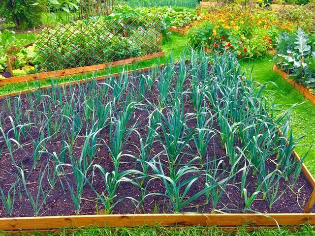 Khu vườn cổ tích của hai chàng trai có cùng sở thích trồng rau, nuôi gà  - Ảnh 10.