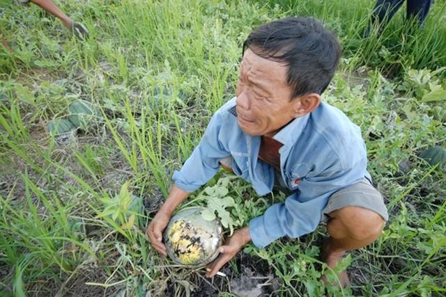 Bức tranh nông nghiệp năm 2016 trước cơ hội thay đổi từ gói tín dụng 50 nghìn tỷ - Ảnh 7.