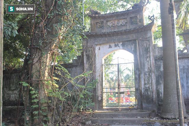 Cây sưa của làng Phụ Chính nằm cạnh cổng chùa.