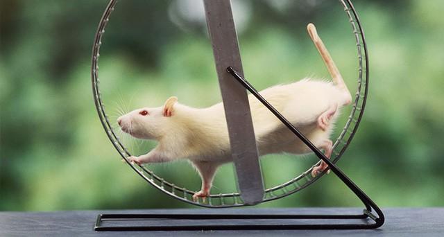 Có thể bạn không công nhận, thế nhưng chúng ta chẳng khác gì chú chuột thí nghiệm đâu.