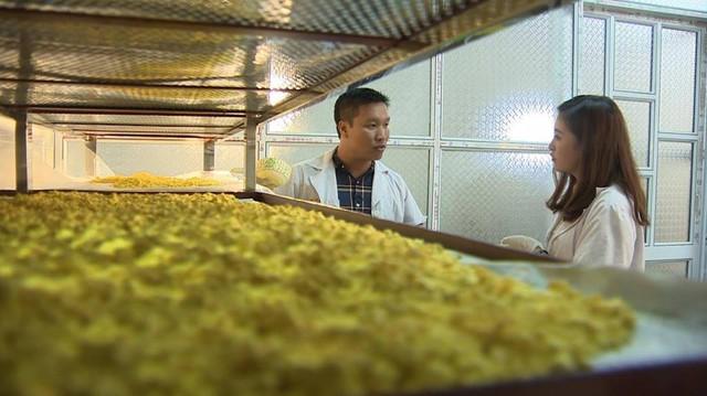 Theo anh Đông, tinh bột nghệ phải sấy khô trong phòng kín, điều hòa thì mới giữ được nguyên chất sản phẩm. Ảnh: HMC.