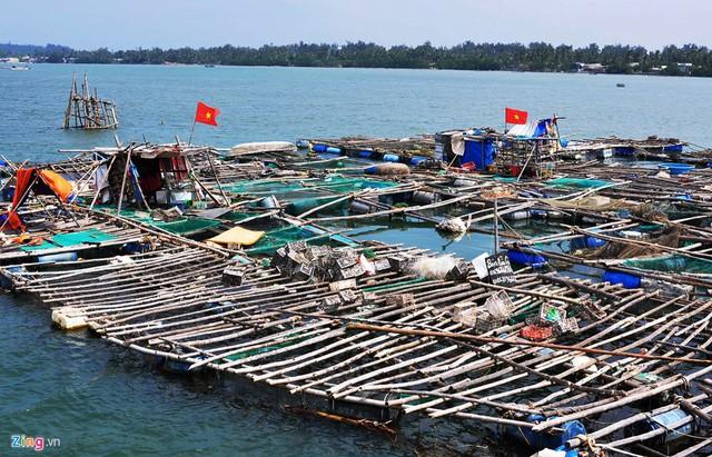 Nghề nuôi tôm hùm, cá bớp, hàu sữa ở vùng biển Sa Huỳnh - Ảnh 1.