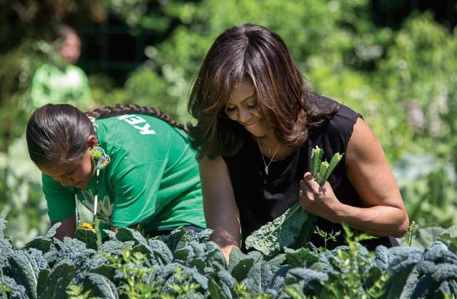 Bà Michelle Obama đang thu hoạch rau cải cùng các công nhân khác tại khu vườn rau dành riêng cho Nhà Trắng.