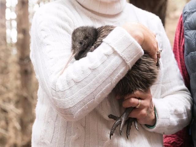 Sau khi chơi golf, du khách cũng có thể chơi cùng với chim kiwi, một trong những loài chim biểu tượng cho New Zealand.
