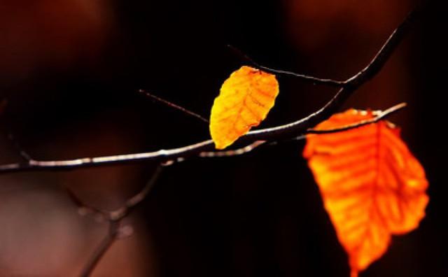Đời thay đổi khi ta thôi đẩy: Học chấp nhận nỗi sợ hãi và sống giấc mơ đời mình - Ảnh 3.