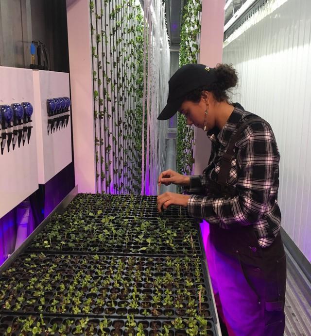 Electra Jarvis - một nông dân 27 tuổi của Square Roots chỉ đến đây 3 ngày 1 tuần để chăm sóc cũng như sắp xếp các loại hạt đã gieo.