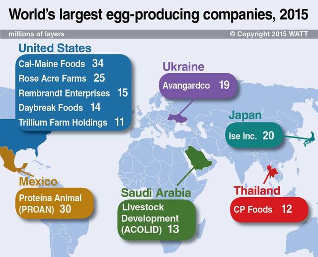 Những Công ty sản xuất nhiều trứng gà nhất thế giới (tỷ gà dẻ trứng)