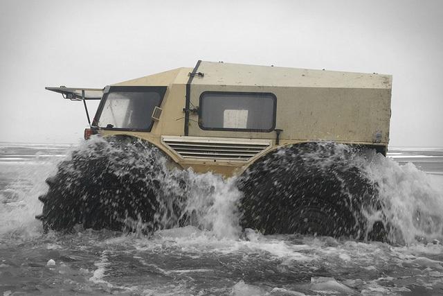 Sherp với khả năng lội nước.