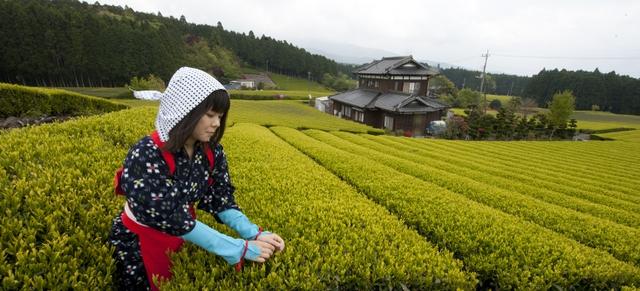 [A Tùng] Việt Nam học được gì từ thành công mở rộng hạn điền Nhật Bản đã đạt được? - Ảnh 4.