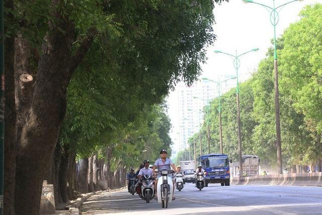 Bí thư Hoàng Trung Hải nói về việc Hà Nội sẽ chặt hạ, chuyển hơn 1.300 cây xanh - Ảnh 1.