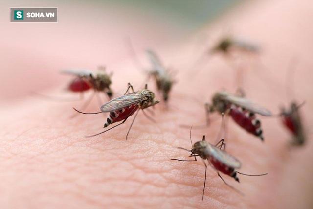 Chuyên gia cảnh báo: Mắc sốt xuất huyết, tuyệt đối không làm 1 việc kẻo bệnh nặng thêm đấy! - Ảnh 1.
