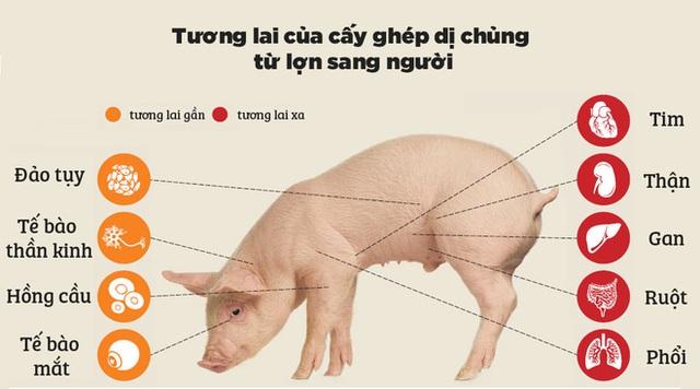 Các nhà khoa học vừa tiến một bước lớn để cấy ghép nội tạng từ lợn sang người