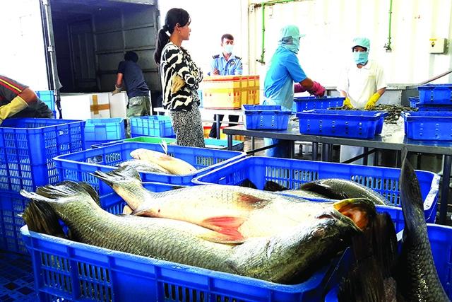Hiệp định FTA Việt Nam - EU: Rộng cửa xuất khẩu cho thủy sản Việt Nam vào EU - Ảnh 1.