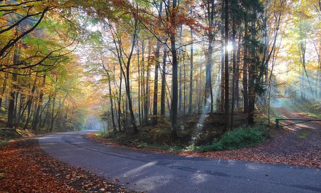 1. Công viên quốc gia Ojców, Ba Lan: Mùa thu vàng của Ba Lan là một quanh cảnh đẹp như mơ mà ai cũng muốn được chứng kiến. Khi cả khu rừng chuyển sang màu vàng, những con đường mòn rừng chạy qua suối, hang động hợp cùng sắc vàng - đỏ khiến nơi này đẹp như tranh vẽ.
