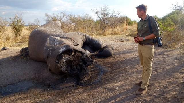Vì sao tuyên bố xem xét lệnh cấm nhập khẩu ngà voi của Tổng thống Donald Trump lại gây tranh cãi? - Ảnh 5.