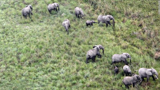 Vì sao tuyên bố xem xét lệnh cấm nhập khẩu ngà voi của Tổng thống Donald Trump lại gây tranh cãi? - Ảnh 6.