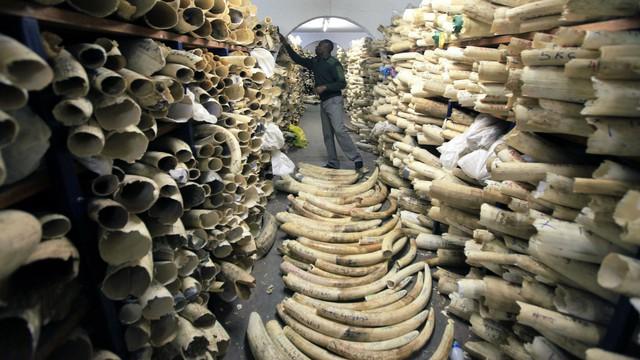Vì sao tuyên bố xem xét lệnh cấm nhập khẩu ngà voi của Tổng thống Donald Trump lại gây tranh cãi? - Ảnh 4.