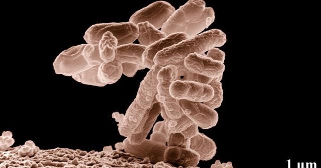 Vi khuẩn kháng kháng sinh đang gây ra cơn ác mộng cho loài người